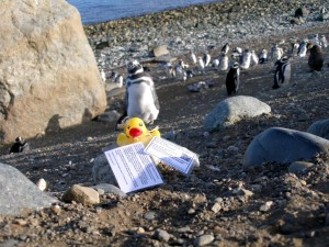 Pingvinøen